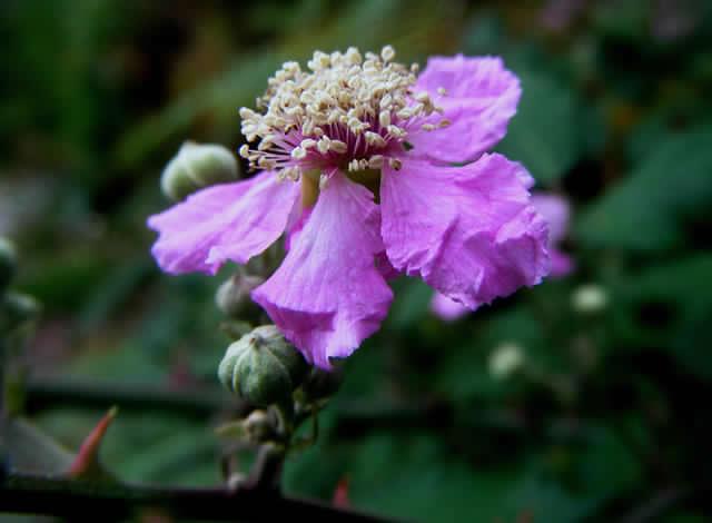 Campaña llama a plantar flores en todo Chile para así ayudar a las abejas a polinizar