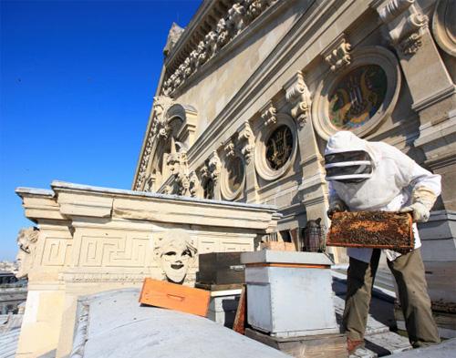 Las abejas y la miel de la Opera de París