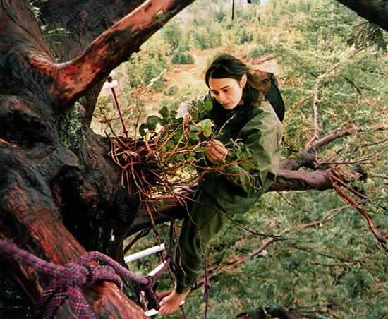 La mujer que subió a un árbol para evitar su tala y no bajó en dos años.