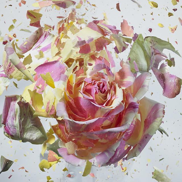 Explociones de Flores de Martin Klimas