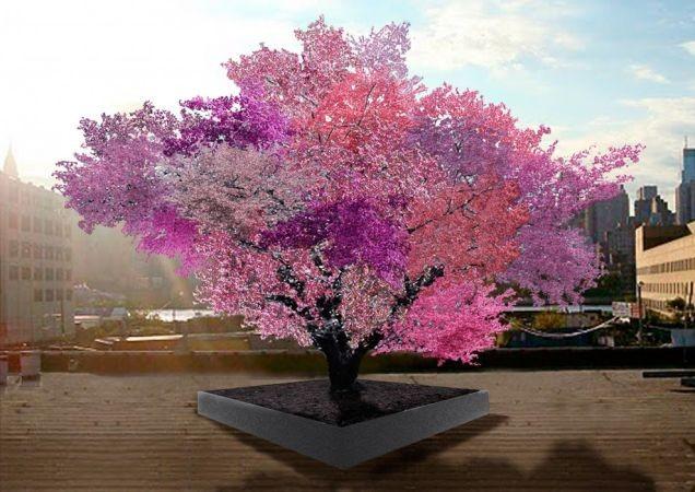 Colorido árbol donde crecen más de 40 frutas a la vez