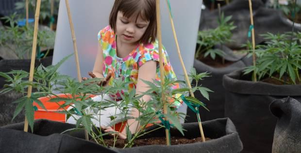 La marihuana salva vidas: inventan aceite revolucionario contra la epilepsia y el cáncer