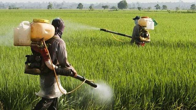 En India utilizan Coca Cola y Pepsi como pesticidas