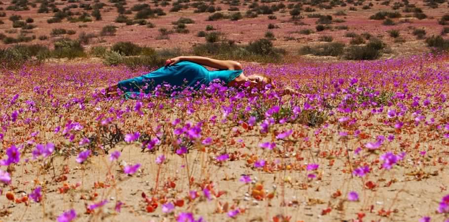 En busca de las flores en desierto florido