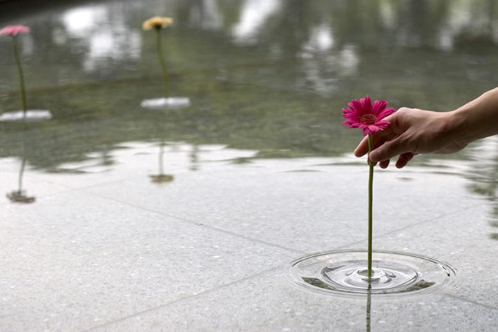 Flores que Flotan en el agua