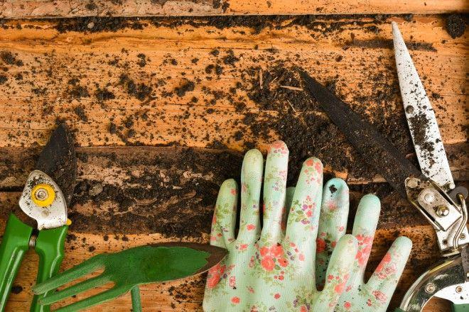 Los Mejores cuidados para tu jardín en Otoño