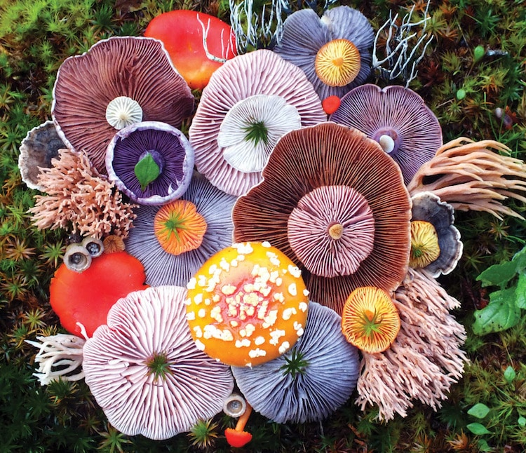 Serie de fotografias de impresionantes hongos coloridos