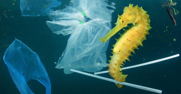 Se pone en marcha The Ocean Cleanup el proyecto más grande para limpiar el océano