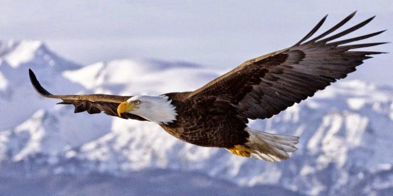 La Renovación del Águila, Una gran historia de lucha y superación