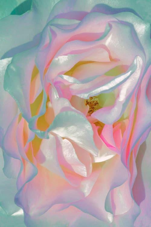 Las flores surrealistas de Xuebing Du