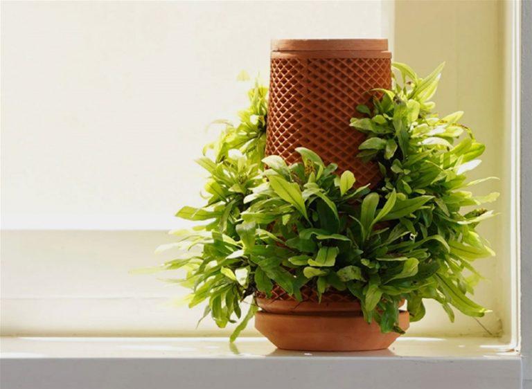 Terraplaner, una sembradora hidropónica que imprime plantas