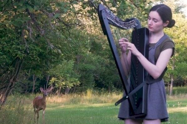 El mágico momento en el que un venado es atraído por la música del arpa