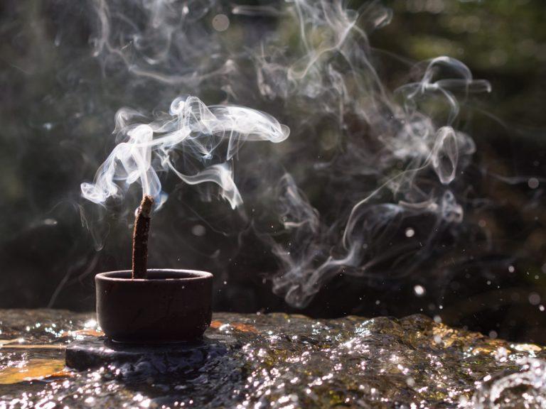 Umo Recolector, Aromas del bosque austral