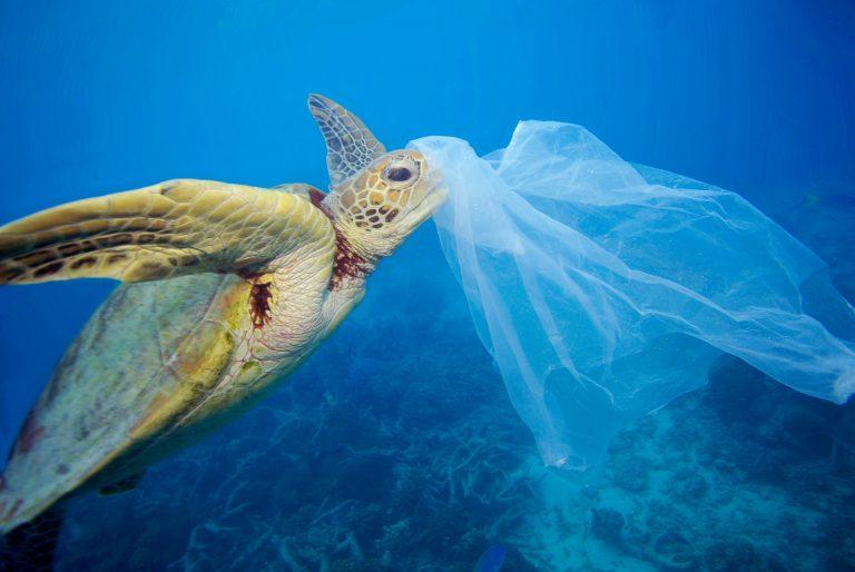Súmate a la campaña por un Chile sin Plásticos